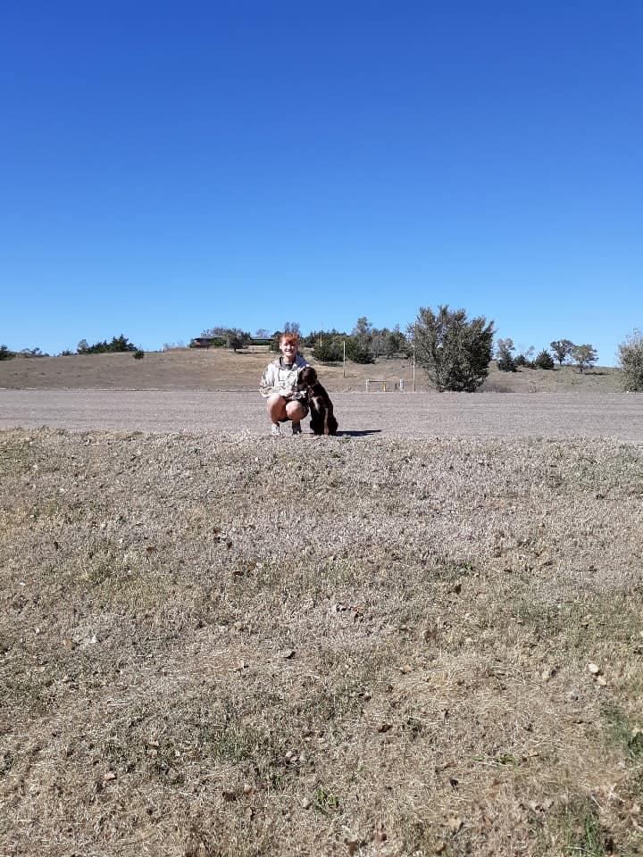 Allenby Veteran Service Dog Collin County, Texas Tolga FaithfulFriend.org